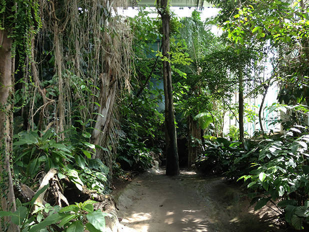 cosmocaixa bosque tropical